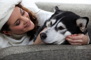 čištění koberců v domácnostech se psy