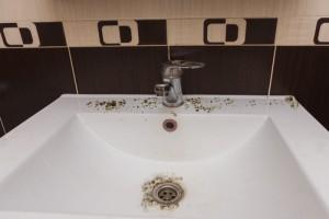 Plíseň na stropě: eliminace a prevence metody